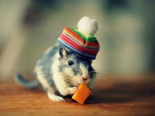 обои Мышонок в шапочке кушает сыр фото