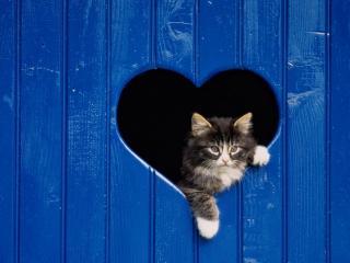 обои Кот в прорези сердечком фото