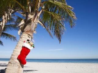 обои Новогодний подарок на тропическом острове фото