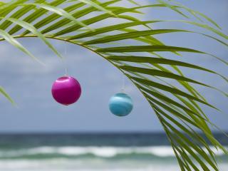 обои Два шарика на тропическом листе фото