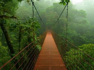 обои Подвесной мост в джунглях фото