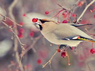 обои Птичка питается зимой фото
