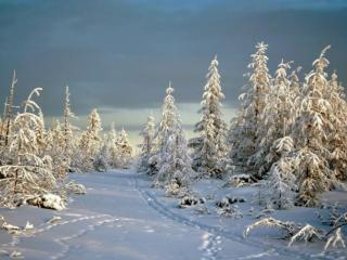 обои Белая сказка зимы фото