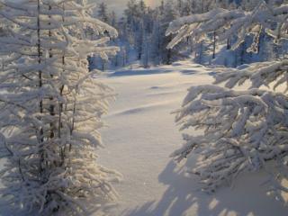 обои Белый,   пушистый снег фото
