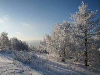 обои Зимние тени фото