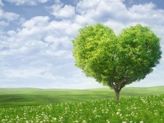 обои Сердечное дерево на зеленой поляне фото