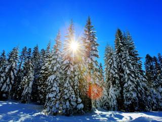 обои Зимний пейзаж в еловом лесу фото