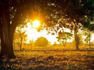 обои Теплое весеннее солнце,   зеленые ростки,   природа фото