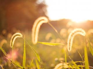 обои Трава в солнечном свете,   макро фото