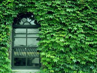 обои Двери и окна фото