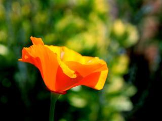 обои Яркий летний цветок в лучах солнца фото