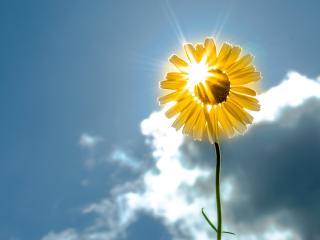 обои Лучи сквозь солнечный цветок фото