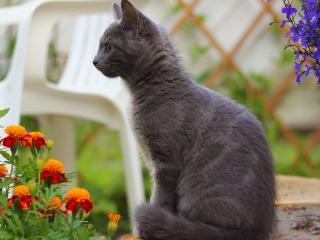 обои Серый котенок смотрит на цветы фото