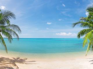 обои Две пальмы и гладь океана фото