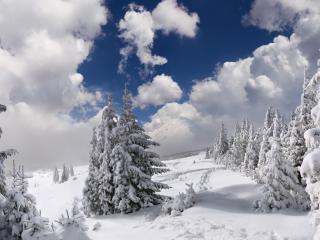 обои Царство зимы в горном лесу фото