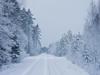 обои Прямая дорога в зимнем лесу фото