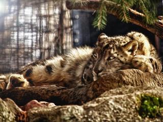 обои Дремучий лес и пантера фото