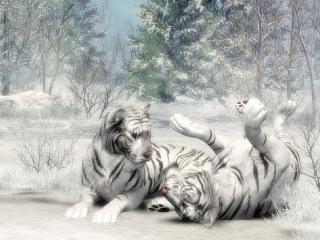 обои Пушистые белые тигры фото