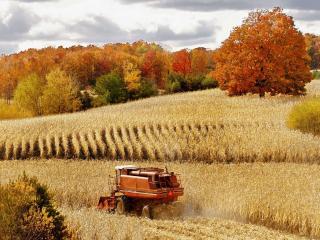 обои Осенняя уборка золота фото