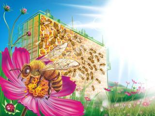 обои Пчела работает фото