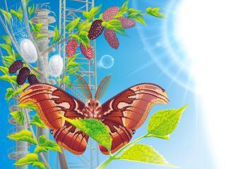 обои Яркая бабочка фото