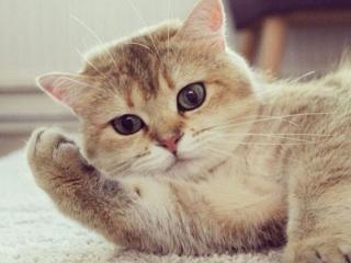 обои Взгляд кота фото