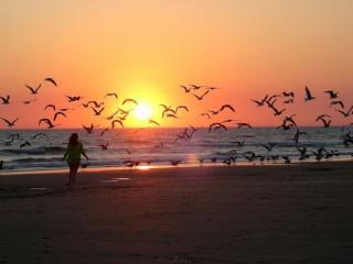 обои Девушка,   чайки,   море и закат фото