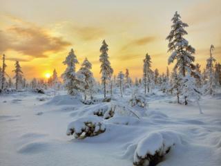 обои Заполярный зимний вечер в лесу фото