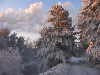 обои Мокушки елей освещены зимнем солнцем фото