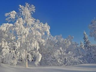 обои Мороз и солнце Сахалина фото