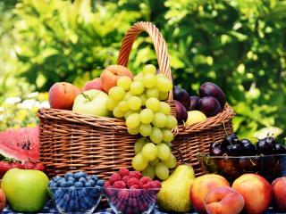 обои Летний набор фруктов в саду фото
