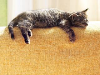 обои Полосатый котенок спит на спинке дивана фото