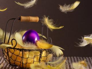 обои Яйцо в желтых перьях фото