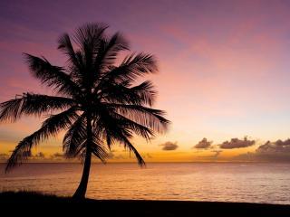 обои Одинокая пальма на закате фото