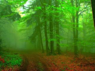 обои Лесная дорога в тумане фото