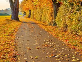обои Осенняя золотая дорожка фото