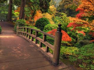 обои Мостик в разноцветном лесу фото