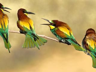 обои Четыре пестрых птички на веточке фото
