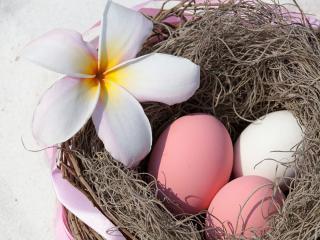обои  Три яйца с цветком в гнезде фото