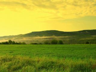 обои Зеленое поле и холм в тумане фото