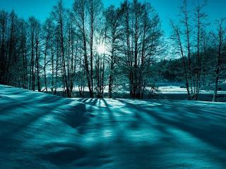 обои Тусклые лучи сквозь зимние деревья фото