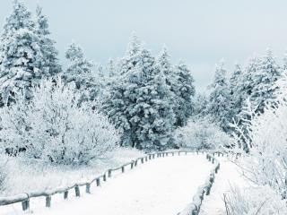 обои для рабочего стола: Заснеженная дорожка в снежном лесу