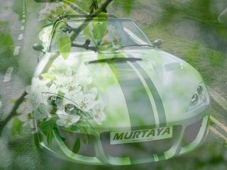 обои Муртая - на фоне зеленой весны фото