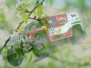 обои Райли машина - на фоне зеленой весны фото