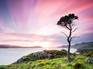 обои Одинокая сосна на берегу залива в розовом закате фото