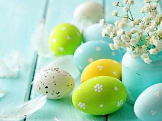 обои Яйца цветы и перья фото