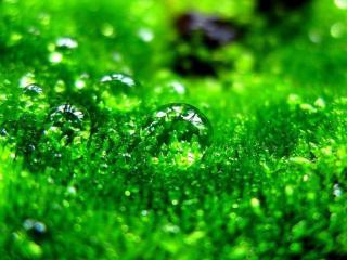 обои Капли на траве фото