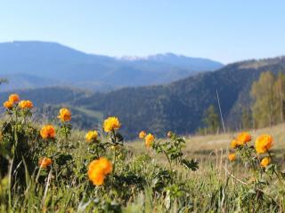 обои Горный Алтай - Весна фото