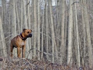 обои Пёс ждёт весну фото