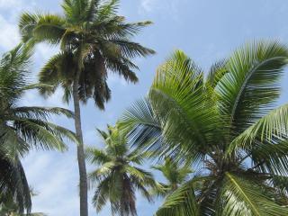 обои Верхушки пальм на фоне неба фото